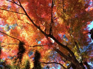 2015年11月:高野山にて